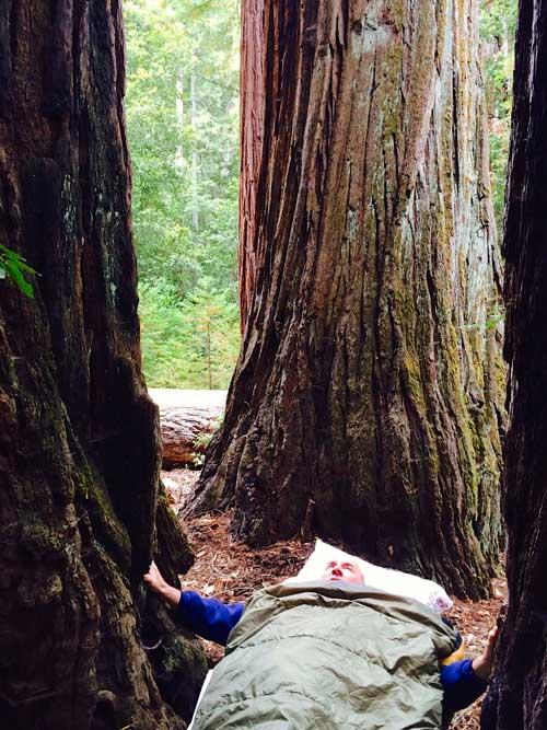 redwoods-grove