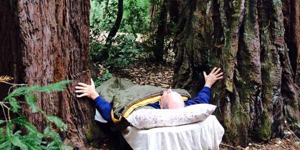 redwoods-sleeping-among-the-trees
