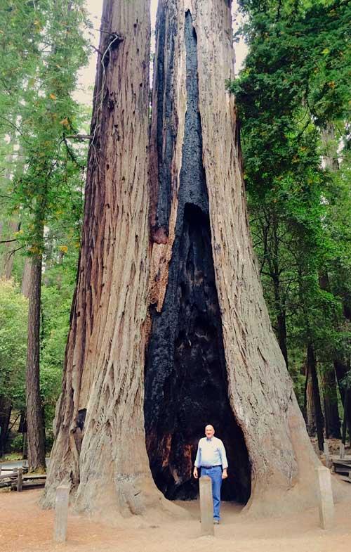 140820-redwoods-17-500x785