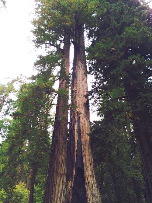redwoods-broadcasting-antennas
