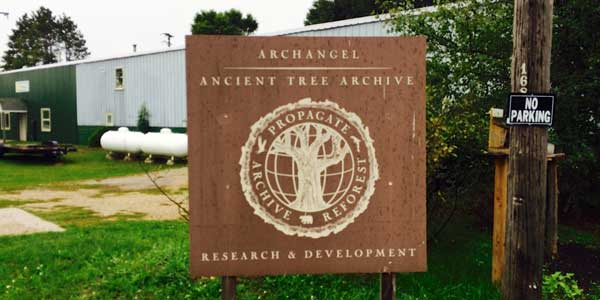 archangel-ancient-tree-archive-sign