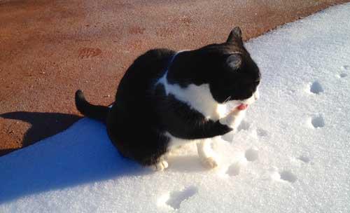 winter-snow-sparkle